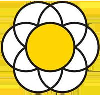 Bellis Blume